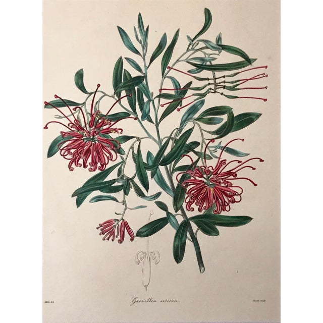 Antique Floral Botanical Colored Etching 19th Century For Sale - Image 4 of 7