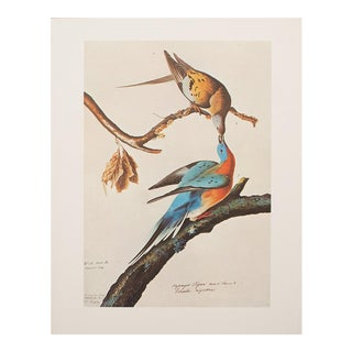 1960s Cottage Style Lithograph of a Passenger Pigeon by Audubon For Sale