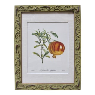 Vintage Pomegranate Botanic Print After Jean Turpin For Sale