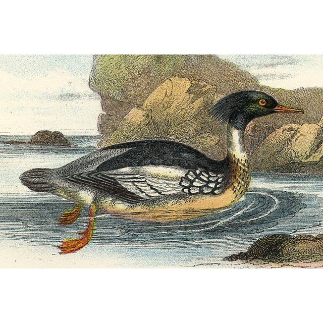 1890s British Shorebird Prints, Pair For Sale - Image 4 of 5