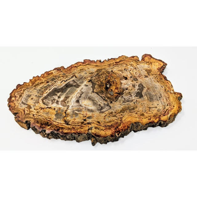 Arhaus Inspired Petrified Wood Tray For Sale - Image 9 of 10