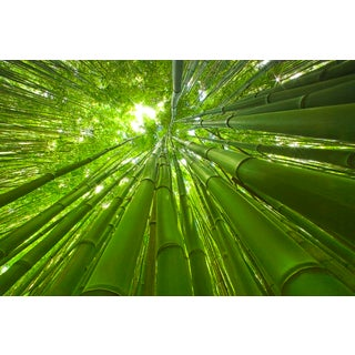 """""""Bamboo"""" Contemporary Landscape Photograph by George Diebold For Sale"""