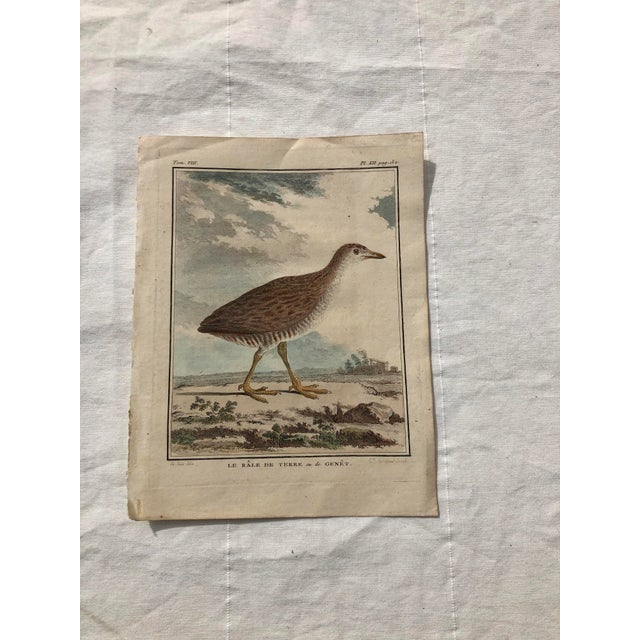 18th Century French Bird Engraving Signed by Jacques De Sève Featuring a Rale De Terre For Sale - Image 13 of 13