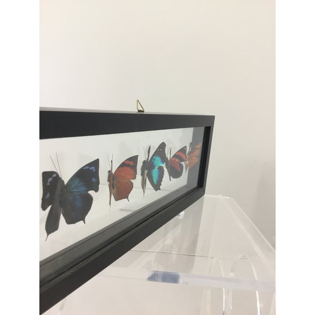 Boho Chic Butterfly Specimen in Shadow Box Frame For Sale - Image 3 of 8