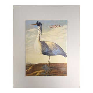 "Albert Eckhout's White-Necked Heron - 1970s Print of 1644 Painting From ""Birds of Brazil"""