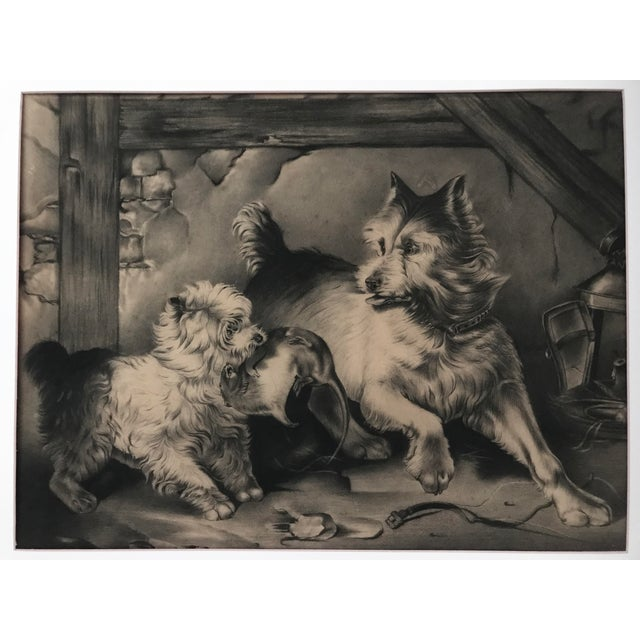 Charcoal drawing of terriers after 19th-century English artist Sir Edwin Landseer. Displayed matted in a lemon gilt...