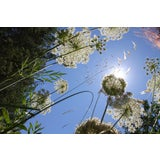 """Image of 2014 """"Weeds 3"""" Contemporary Landscape Photograph by Lekha Singh For Sale"""
