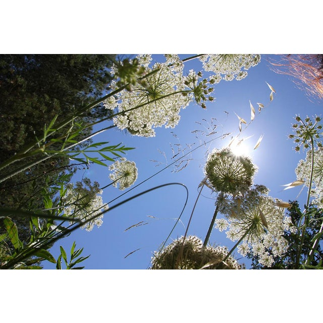"""2014 """"Weeds 3"""" Contemporary Landscape Photograph by Lekha Singh For Sale"""