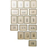 Image of 18 French Classical 19th Century Prints For Sale