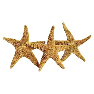 Large Natural Golden Starfish - Set of 3 For Sale