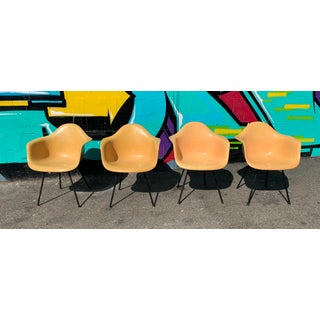 4 1950s Vintage Herman Miller Armshell Chairs Preview