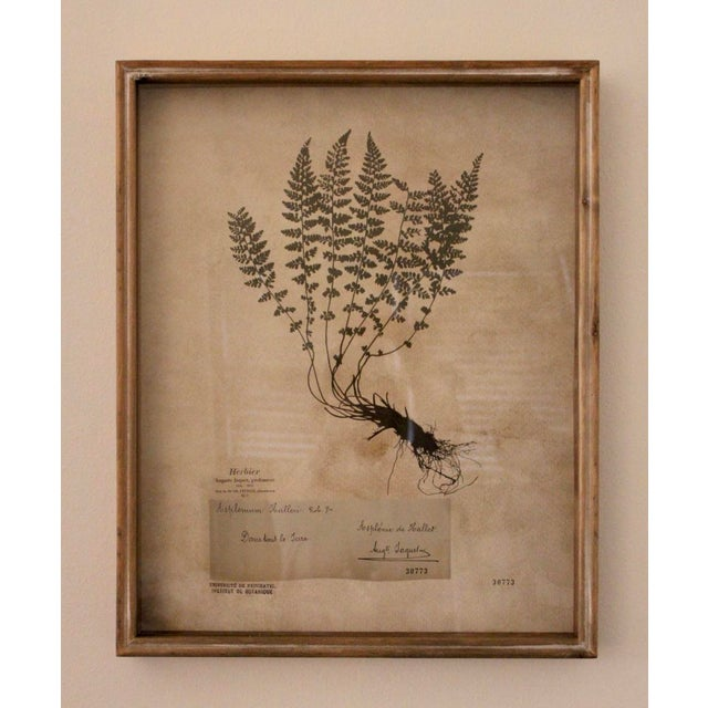 Beautiful set of 2 botanical prints in reclaimed wooden frames, glass overlay. These prints are so well done we thought...