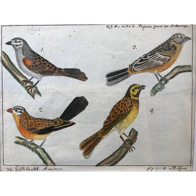 Antique Original Watercolor Birds Ornithological Study 18th Century For Sale - Image 4 of 7
