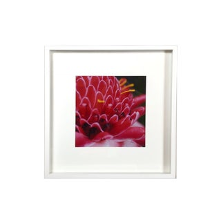 Framed Shadow Box Hot Pink Floral Photography For Sale