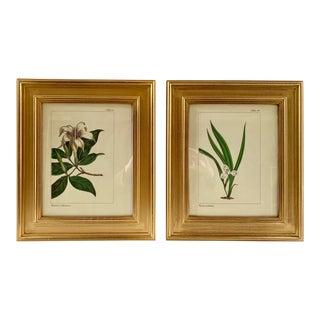 Framed Vintage Botanical Prints - a Pair For Sale