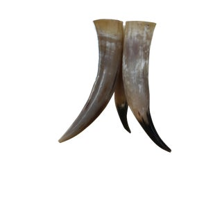 South African Cow Horn Vase Trio For Sale