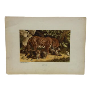 "Vintage Mounted Color Animal Print, ""Leopard"" by Selmar Hess Publisher For Sale"