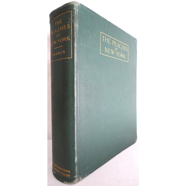 1910s Large Illustrated Book, Hendrick's the Peaches of New York, 1st Edition For Sale In San Francisco - Image 6 of 6