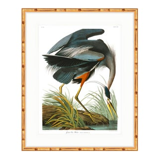 Audubon Great Blue Heron Birds of America Gold Bamboo Framed Print