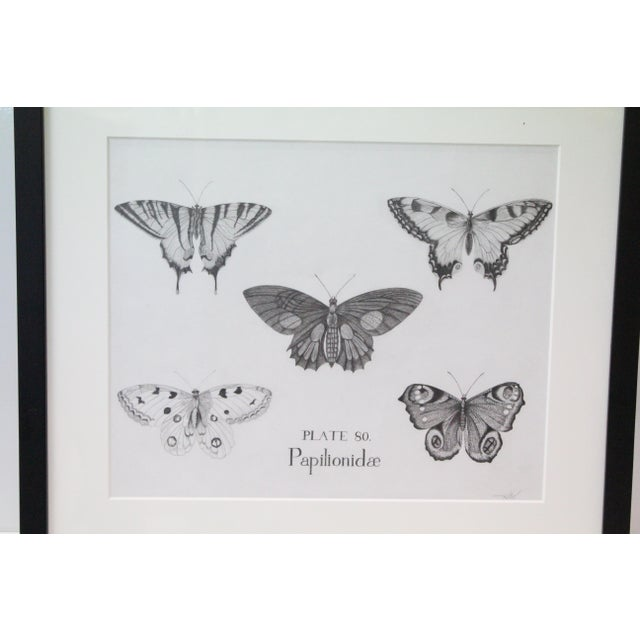 Black and White Butterflies Sketch For Sale - Image 4 of 10