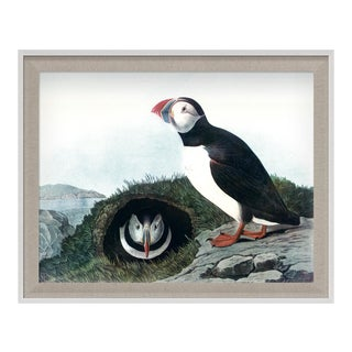 Audubon 6, Framed Artwork For Sale