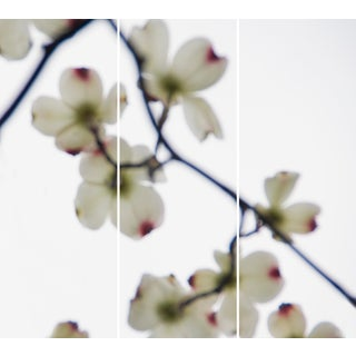 Jeri Eisenberg Dogwood White - Red Tips Triptych Paper Piece For Sale