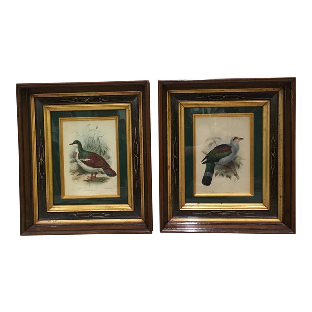 J. G. Koulemans Hand Colored Bird Lithographs - A Pair For Sale