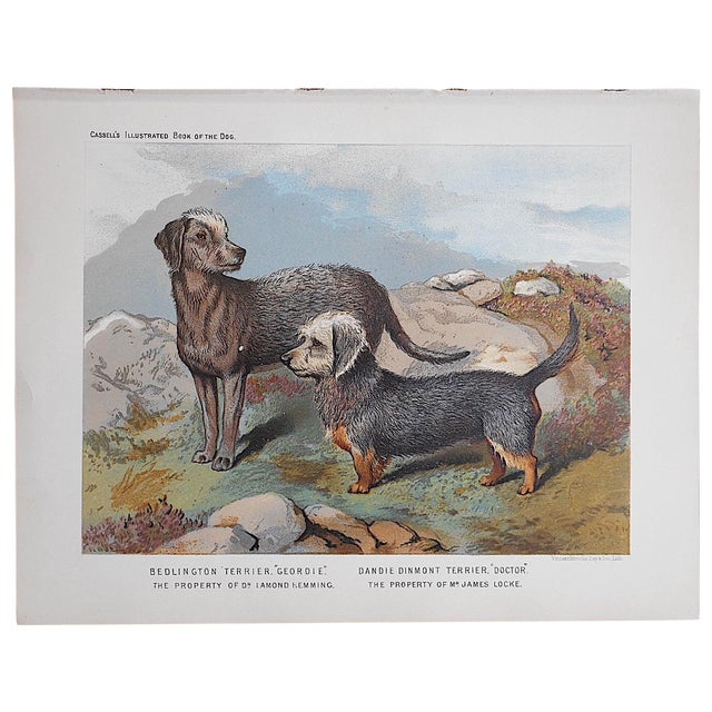 Antique Dog Lithograph - Terriers - Image 1 of 3