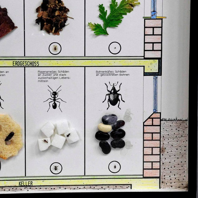 A Great Vintage School Teaching Display Of Household Pests (2) For Sale - Image 4 of 6