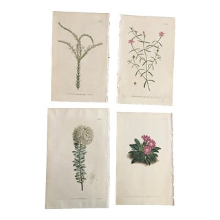 Set of 19th Century William Curtis Hand-Colored Botanical Engravings