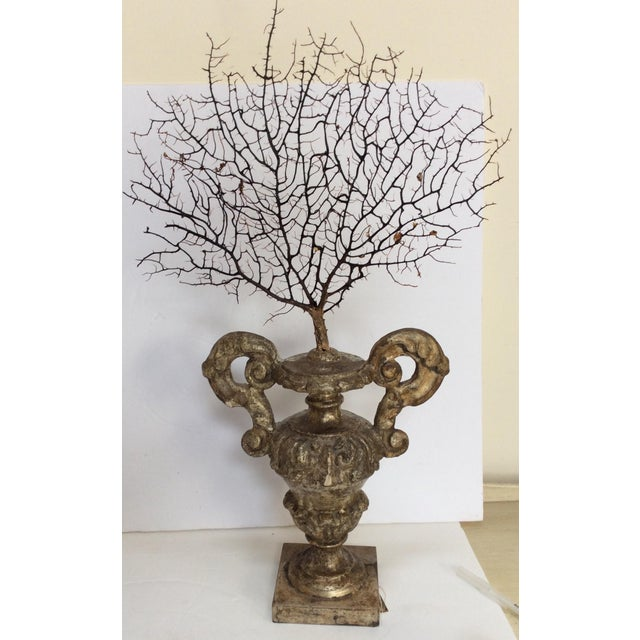 Italian Antique Italian Silvered Wood Urn With Sea Fan For Sale - Image 3 of 7
