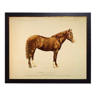 Country Print of Watson the Horse Bookplate - 26x20 For Sale
