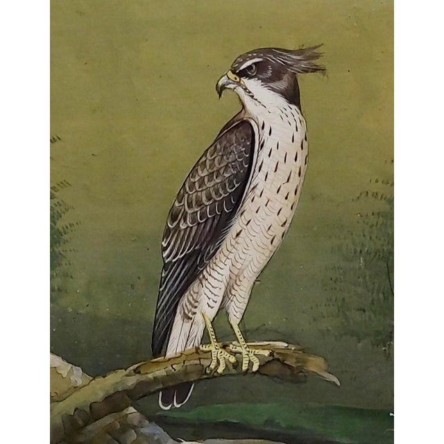 Islamic 18th Century Antique Middle Eastern or Persian Falcon Painting W/Calligraphy For Sale - Image 3 of 8