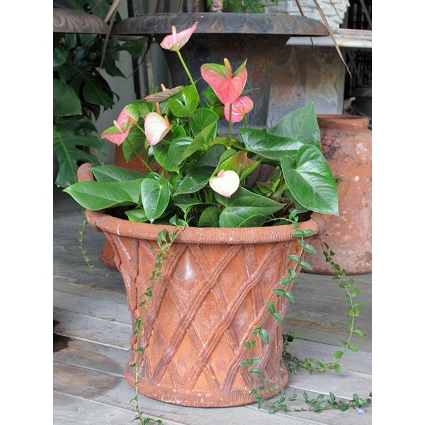 A unique and large-scaled English terracotta basket weave double-handled garden urn; the flared cylindrical urn flanked by...