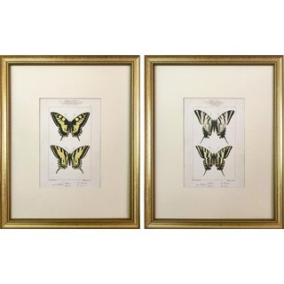 Antique Pair French Prints of Butterflies Paris 1864 by Lucas For Sale