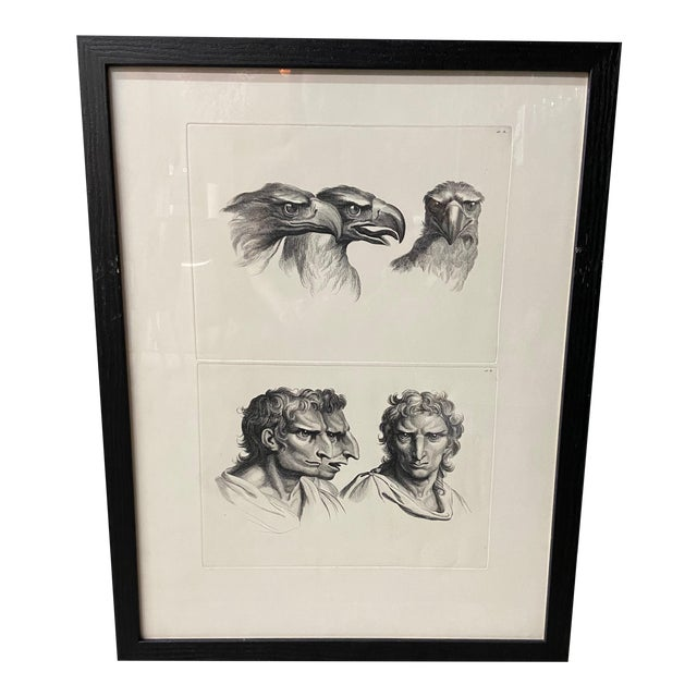 Man as Eagle - Physiognomic Heads Series Framed Illustration by Charles Le Brun For Sale