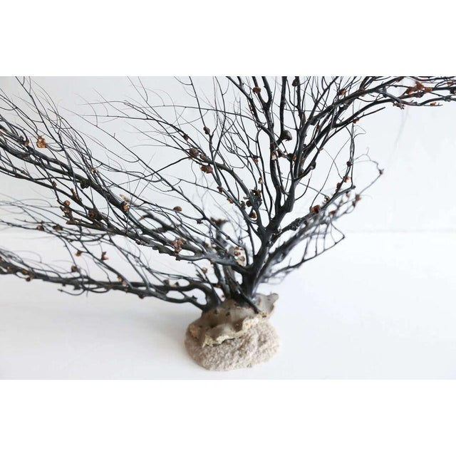 1990s Black Sea Whip Coral Sculpture For Sale - Image 5 of 8