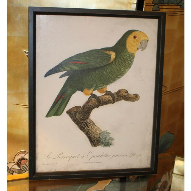 Transport yourself to a tropical jungle with vibrant bird artworks. Four framed prints celebrate the vivid plumage of...