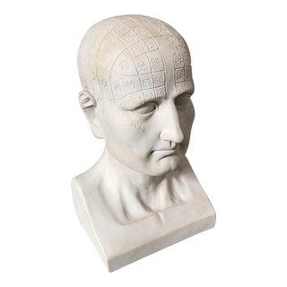 Phrenology Bust Sculpture