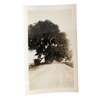 1930s Vintage Low Country with Live Oak and Spanish Moss Photograph For Sale