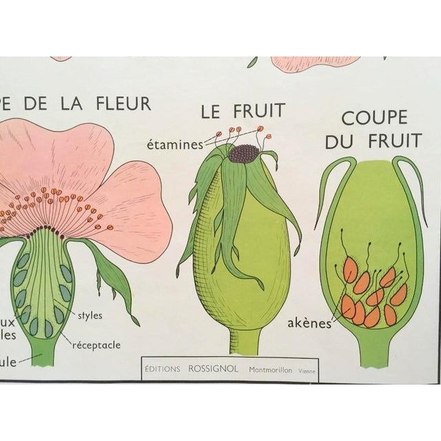 Vintage French School Wild Rose Poster - Image 4 of 7