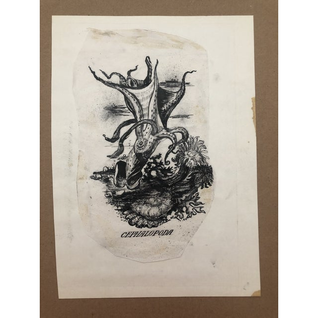 Illustration of an Octopus, signed and dated 1940 Born in Des Moines, Iowa, William Charles Palmer (1906-1987) studied at...