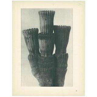 1928 Winter Horsetail, Original Period Photogravure N5 by Karl Blossfeldt For Sale