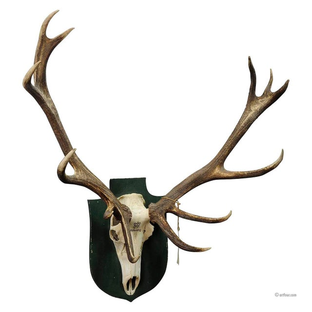 Mid 20th Century Large Black Forest Deer Trophy From Salem - Germany 1967 For Sale - Image 5 of 5