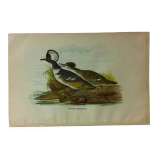 "Vintage Birds of Water Color Print, ""Hooded Mergauser"", Circa 1930 For Sale"