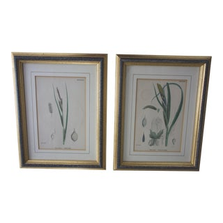 Antique Framed Aquatic Botanical English Prints - a Pair For Sale