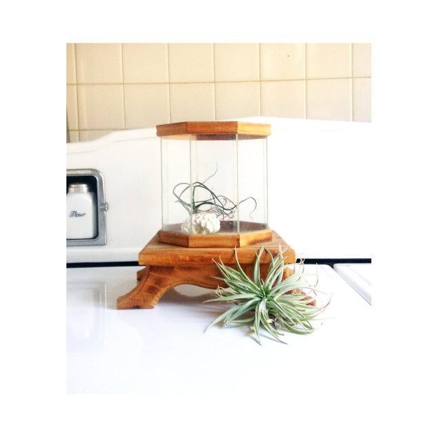 Wood and Glass Octagonal Terrarium - Image 4 of 5