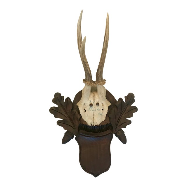 Black Forest Antler Trophies Mounted on a Shield Back With Leaf Decoration For Sale