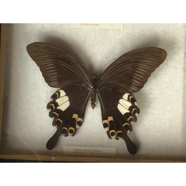 Mid-Century Modern Vintage Mounted Butterflies for Wall Mounting For Sale - Image 3 of 6