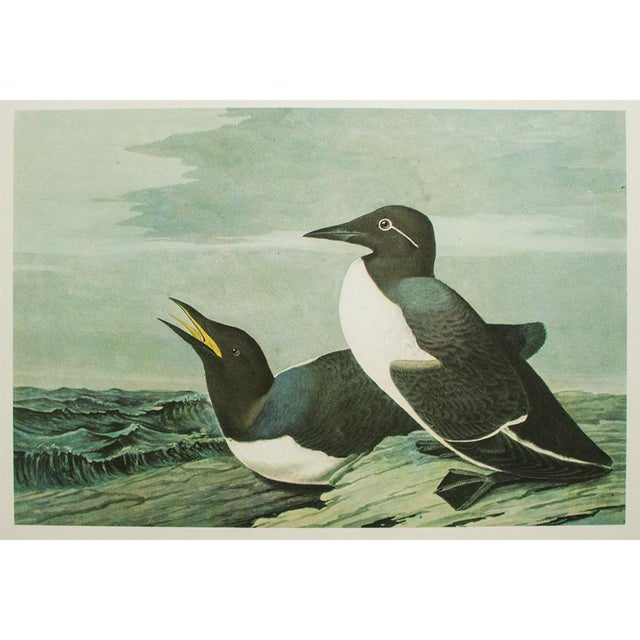 John James Audubon 1966 Cottage Print of Harlequin Duck and Common Murre by Audubon For Sale - Image 4 of 6